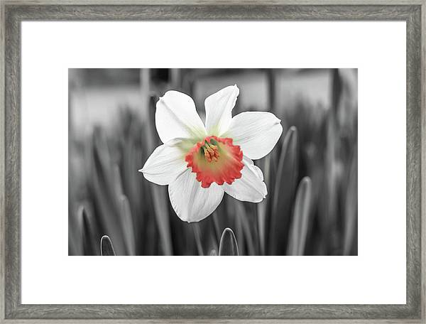 Pink Cup Pop Framed Print