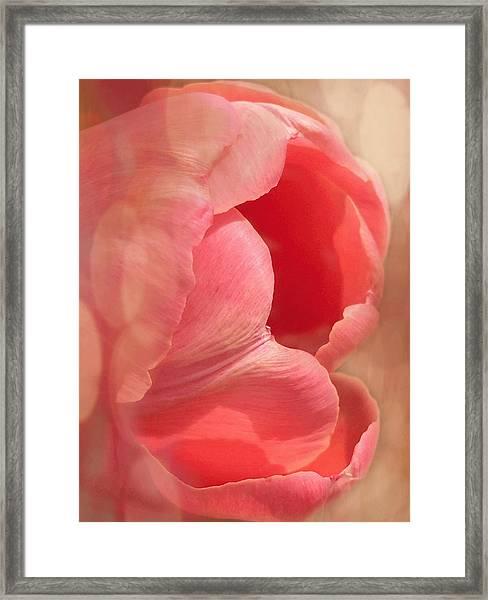 Pink Dreams Framed Print