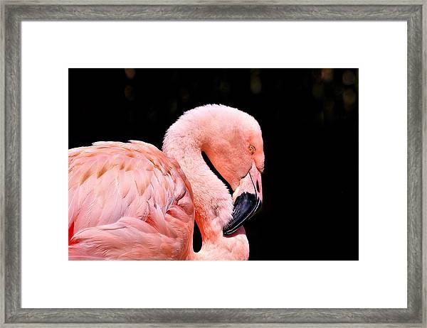 Pink Flamingo On Black Framed Print