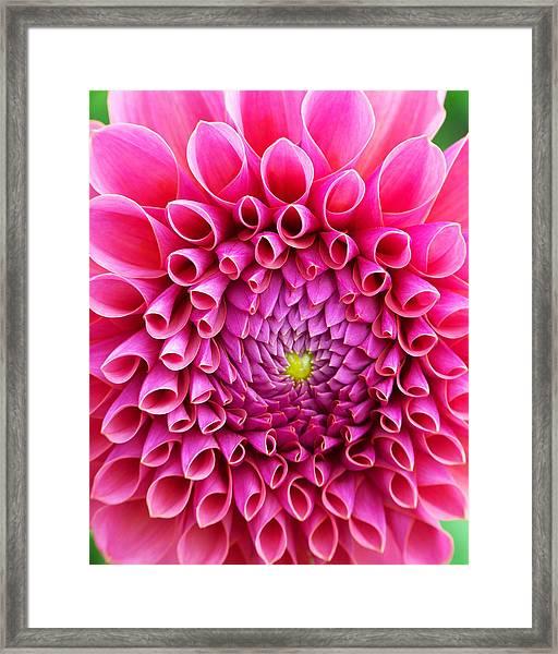 Pink Flower Close Up Framed Print