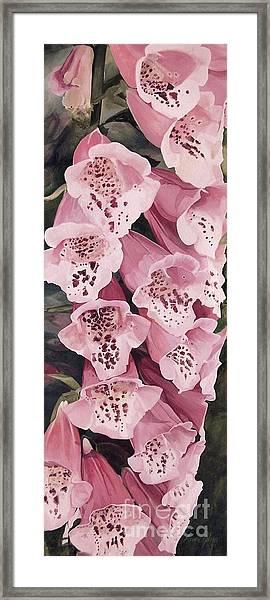 Pink Foxglove Framed Print