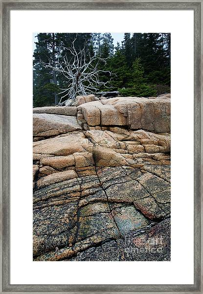 Pink Granite And Driftwood At Schoodic Peninsula In Maine  -4672 Framed Print
