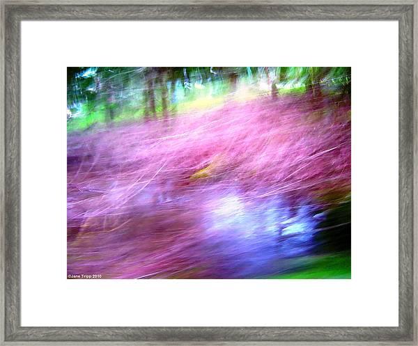 Pink Framed Print by Jane Tripp