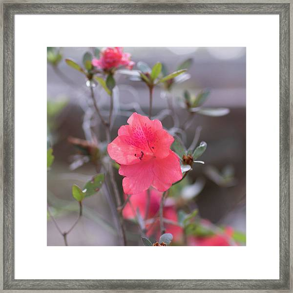 Pink Orange Flower Framed Print