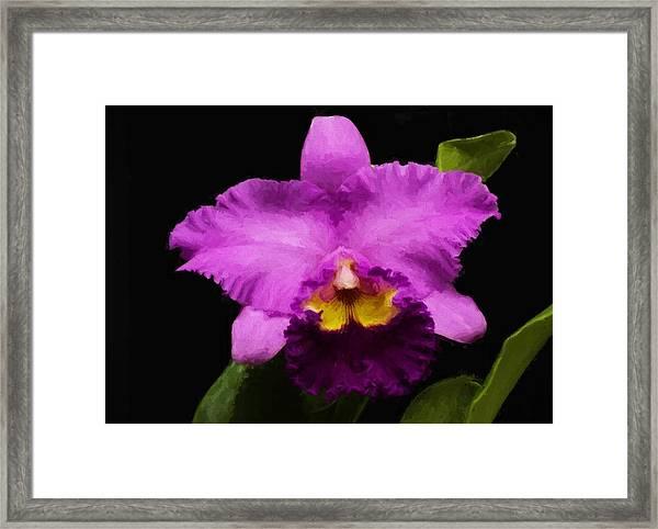 Pink Orchid Framed Print