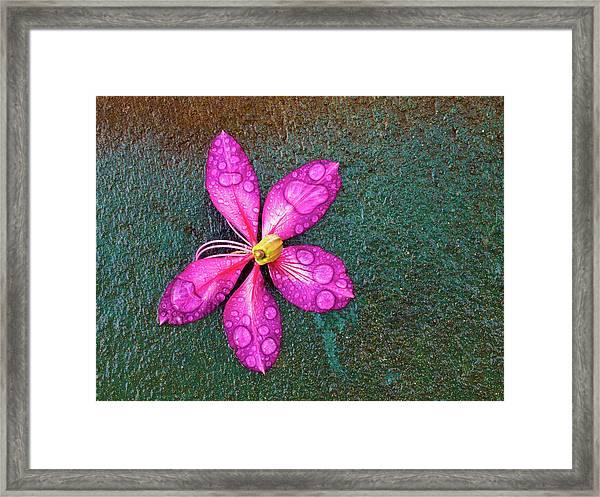 Pink Orchid Flower Framed Print
