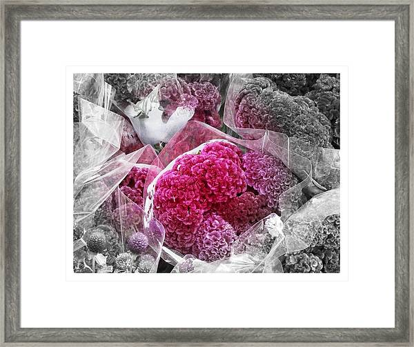 Pink Paradise Framed Print