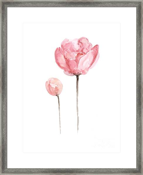 Pink Peonies Watercolor Painting Framed Print