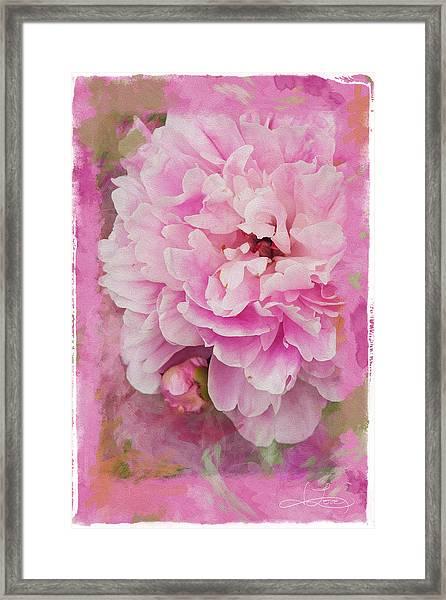 Pink Peony 2 Framed Print