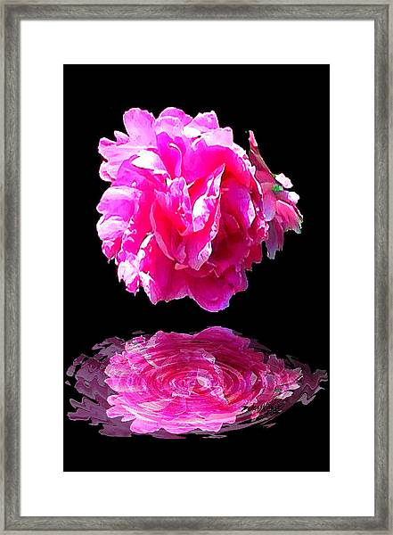 Pink Peony Reflections Framed Print