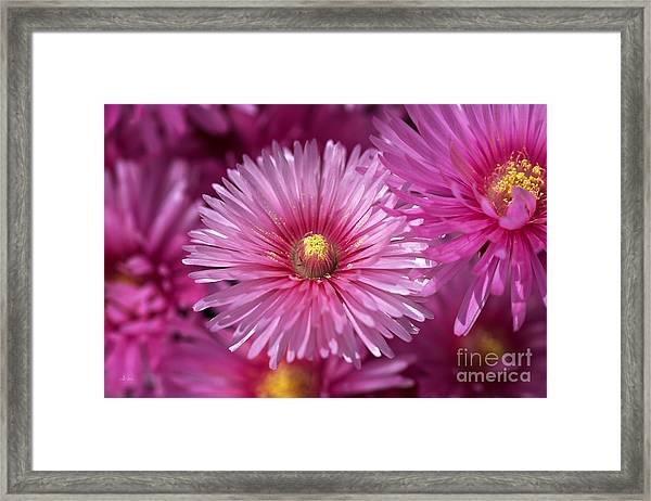Pink Pigface Flowers Framed Print