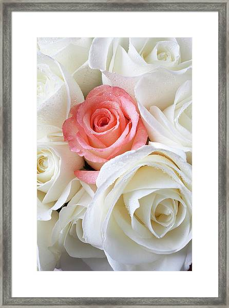 Pink Rose Among White Roses Framed Print