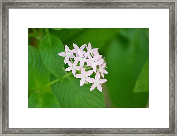 Pink Stars Framed Print