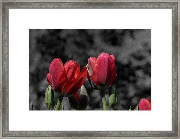 Pink Tulip Pop Framed Print
