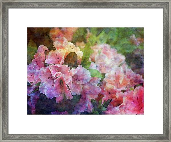 Pink With White Frills 1503 Idp_3 Framed Print