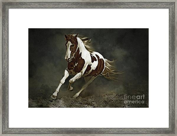 Pinto Horse In Motion Framed Print