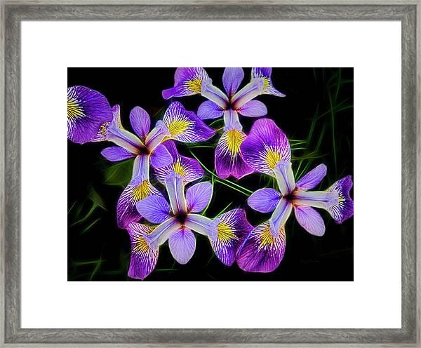 Pinwheel Purple Iris Glow Framed Print