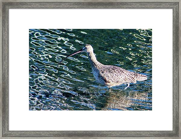 Piper Profile Framed Print
