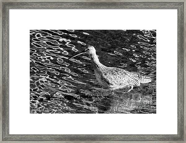 Piper Profile, Black And White Framed Print