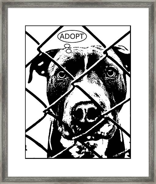 Pitbull Thinks Adopt Framed Print by Dean Russo Art
