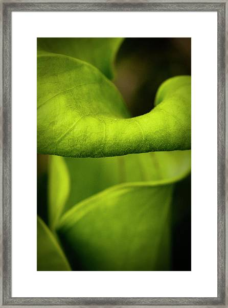 Pitcher Plant Abstract Framed Print