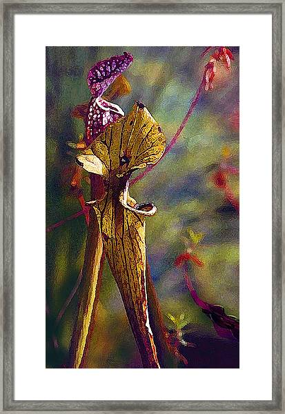 Pitcher Plant Framed Print