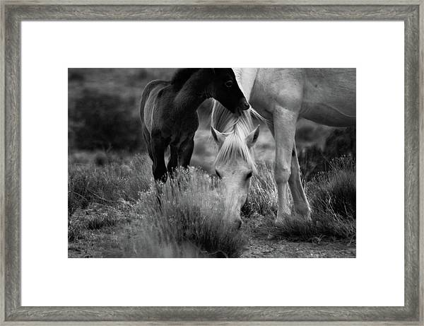 Framed Print featuring the photograph Placitas 2 by Catherine Sobredo