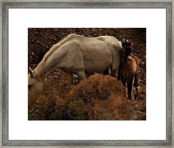Framed Print featuring the photograph Placitas 6 by Catherine Sobredo
