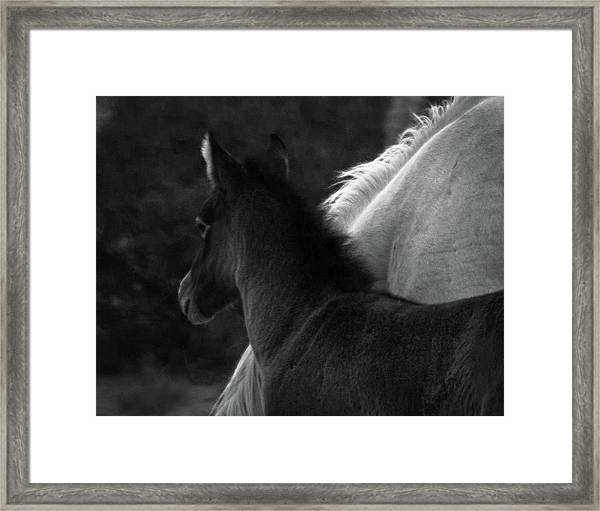 Framed Print featuring the photograph Placitas 9 by Catherine Sobredo