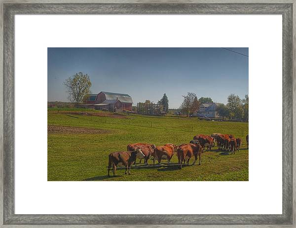 1014 - Plain Road Farm And Cows I Framed Print