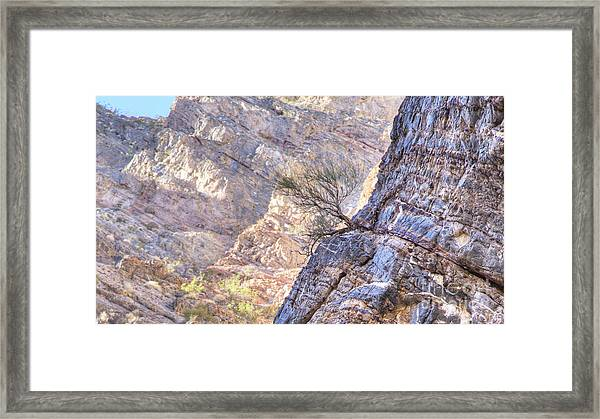 Plant Growth In Rock Wall In Marble Canyon Framed Print