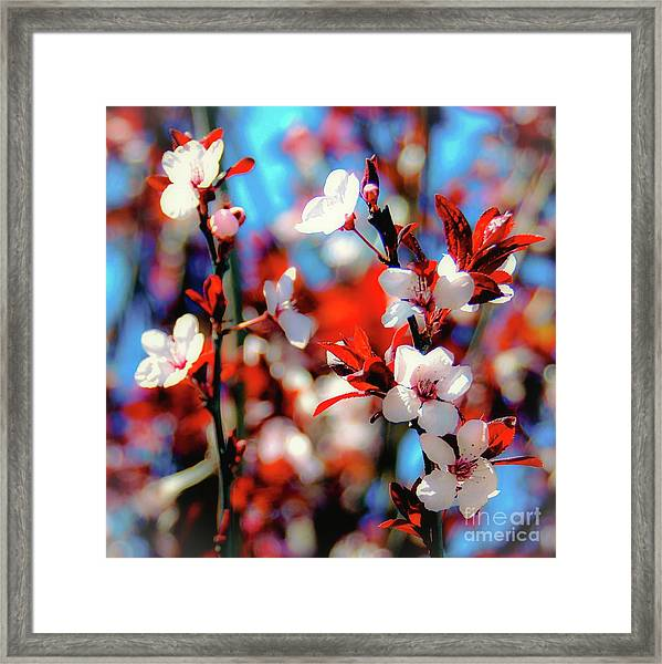 Plants And Flowers Framed Print
