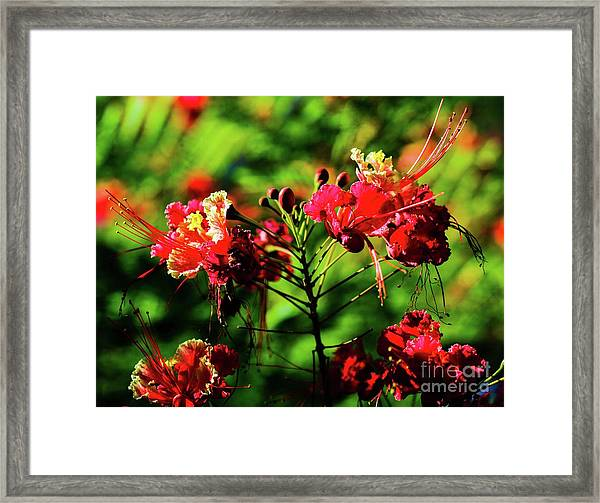 Plants And Flowers In Hawaii Framed Print by D Davila