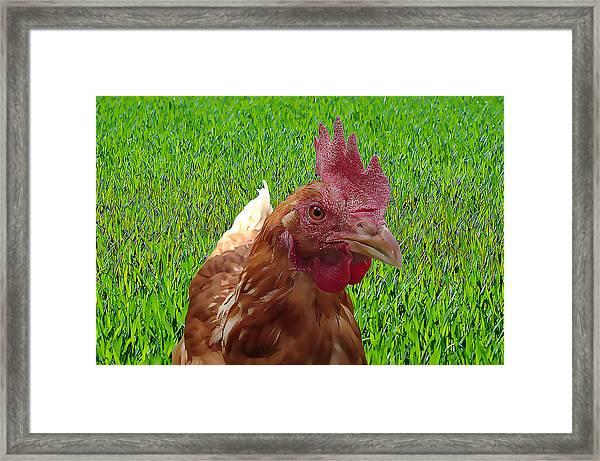 Play Chicken Framed Print