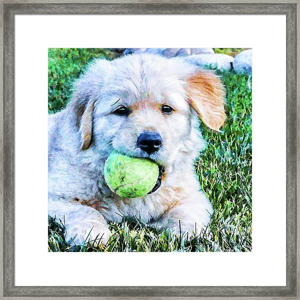 Playful Pup Framed Print