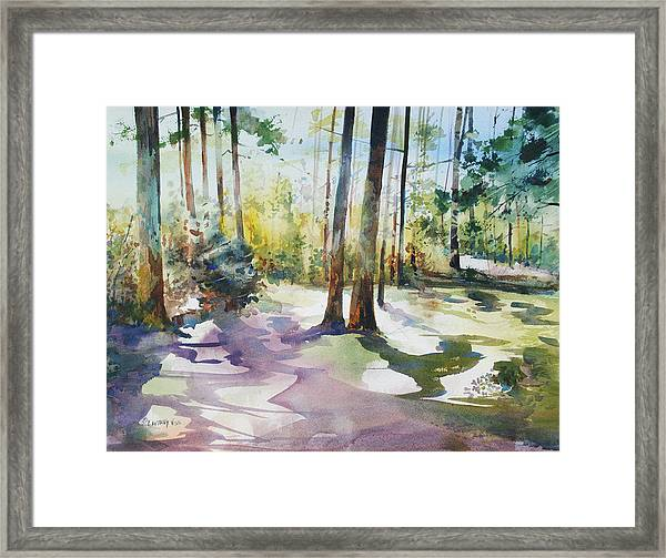 Playful Shadows Framed Print