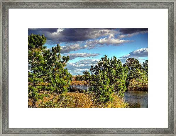 Pleasure House Point Natural Area  Framed Print