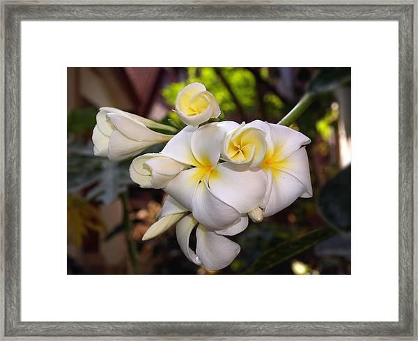Plumeria Portrait Framed Print