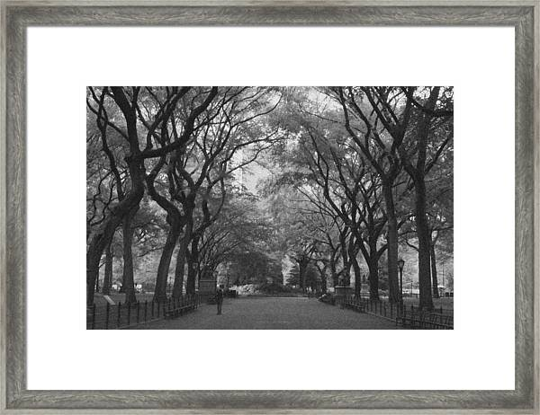 Poets Walk In Central Park Framed Print