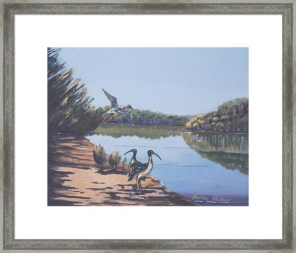 Point Clare Reflections 1 Framed Print