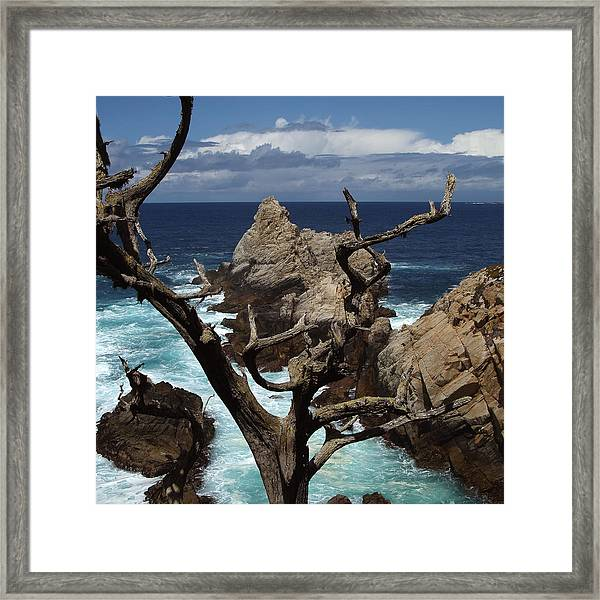 Point Lobos Rocks And Branches Framed Print