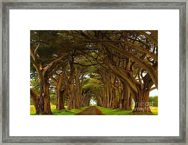 Point Reyes Cypress Tunnel Framed Print