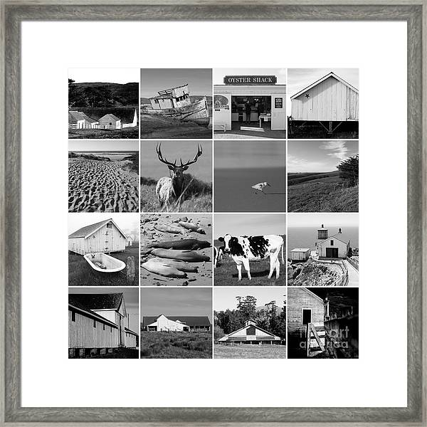 Point Reyes National Seashore 20150102 Bw Framed Print
