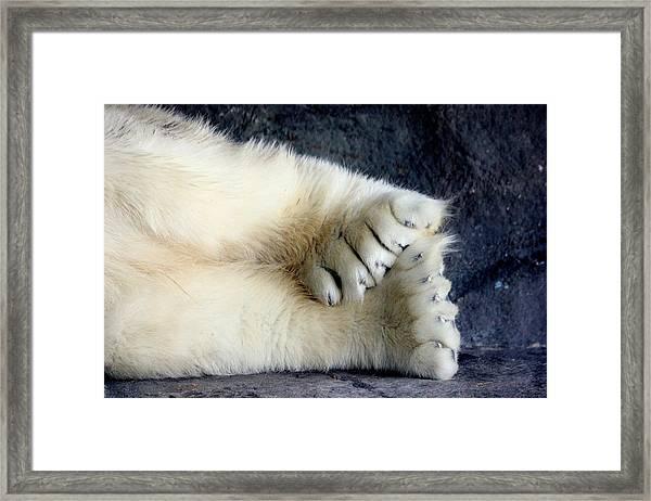 Polar Bear Paws Framed Print
