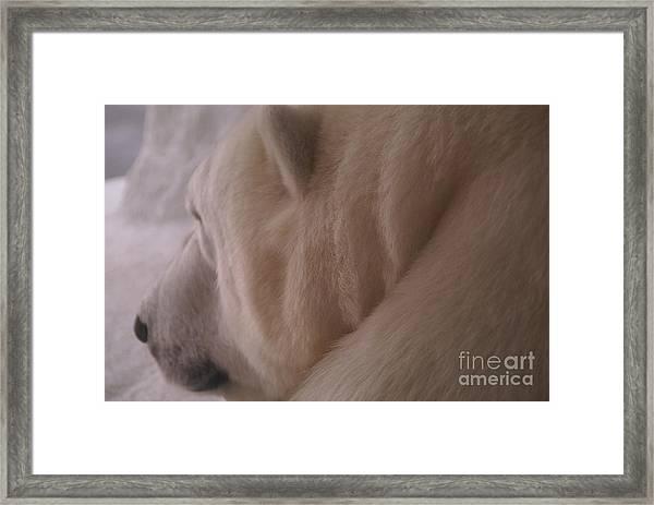 Polar Dream Framed Print