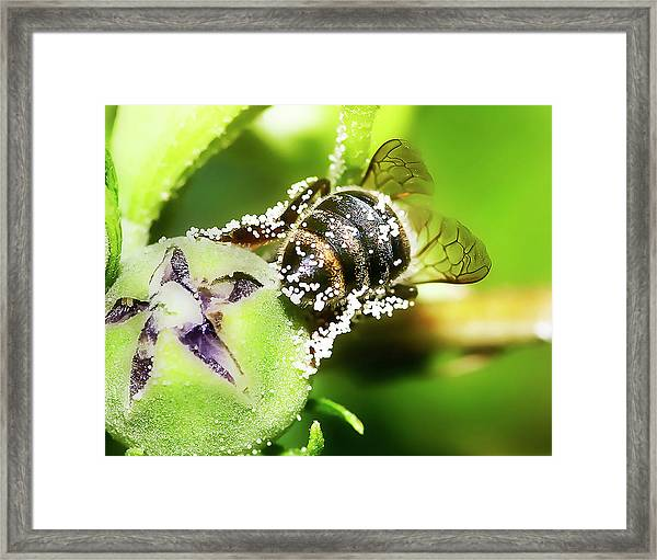 Framed Print featuring the photograph Pollen Bee by Scott Cordell