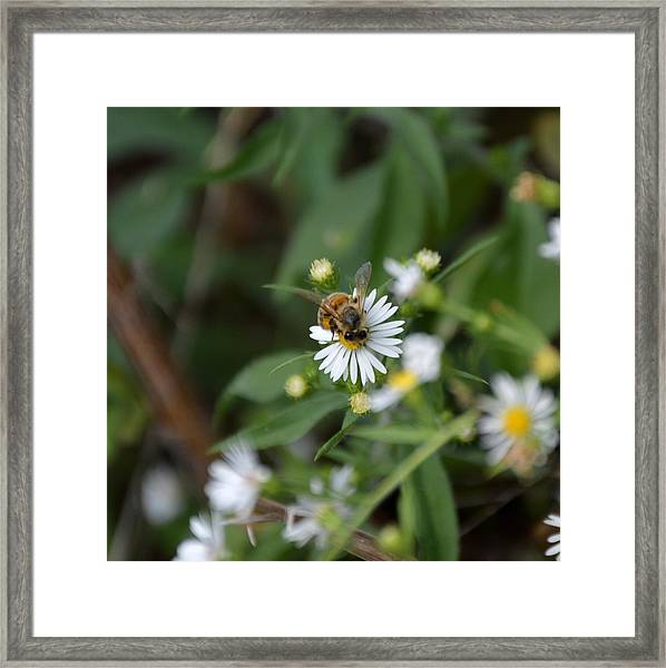 Pollinatin' Framed Print