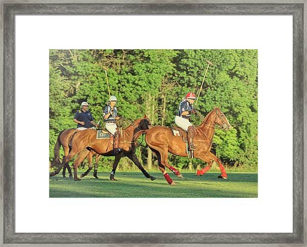 Polo Ponies Framed Print