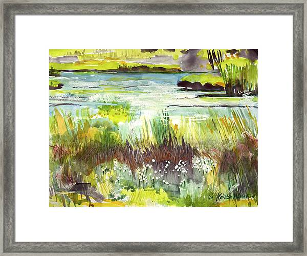 Pond And Plants Framed Print