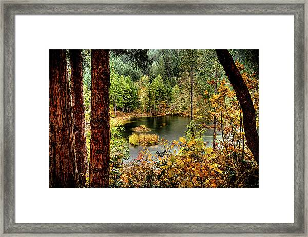 Pond At Golden Or. Framed Print